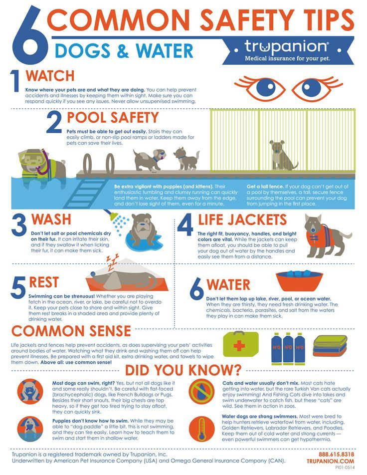 Keeping Your Dog Safe Near Water Safety Infographic Pet Emergency Dog Infographic