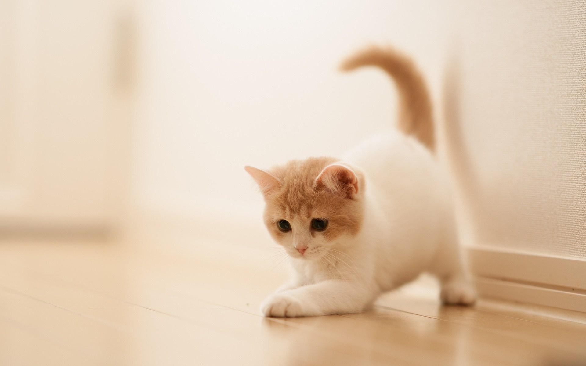my cute kitten playing imgur