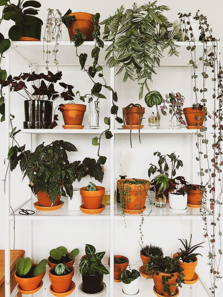 As melhores Plantas para cultivar em apartamento