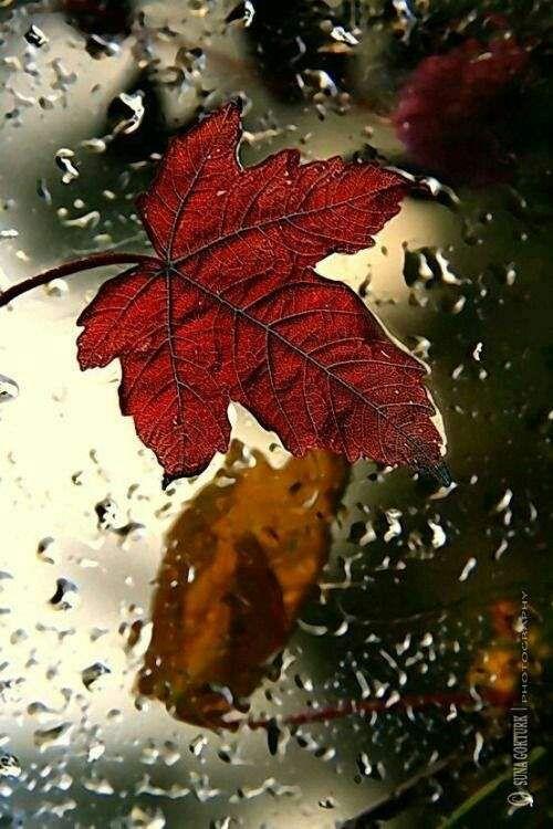 Raining Wallpaper Cool Whatsapp Status 024 Autumn Rain Autumn Leaves Rain Wallpapers