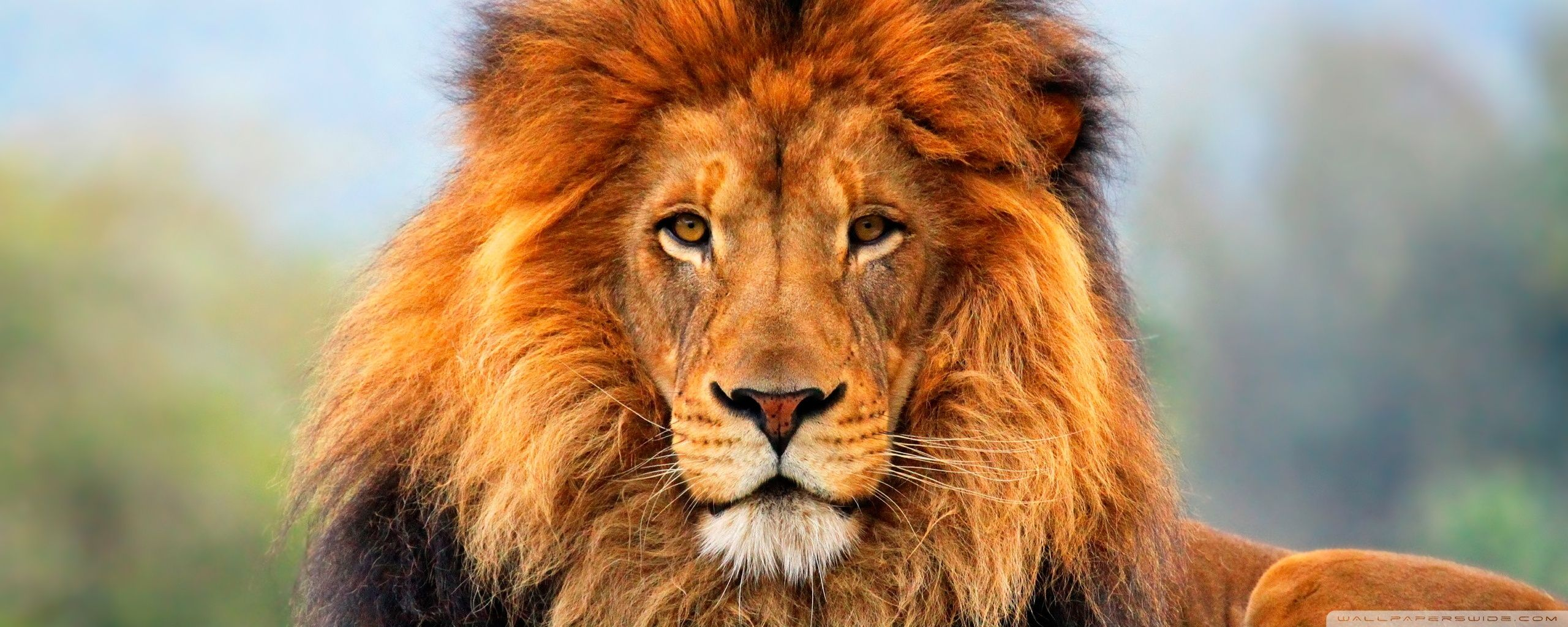 Pin By Mark On Earth S Salvation Fauna Flora Wildlife Lion Images Abstract Lion Lion Wallpaper