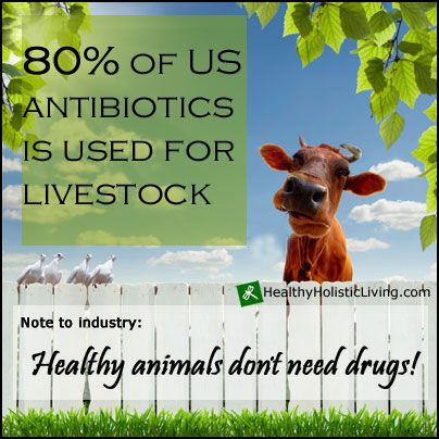 Livestock like cattle and chickens are treated with an increasing number of antibiotics, which now amounts to four fifths of all the antibiotics consumed in the United States