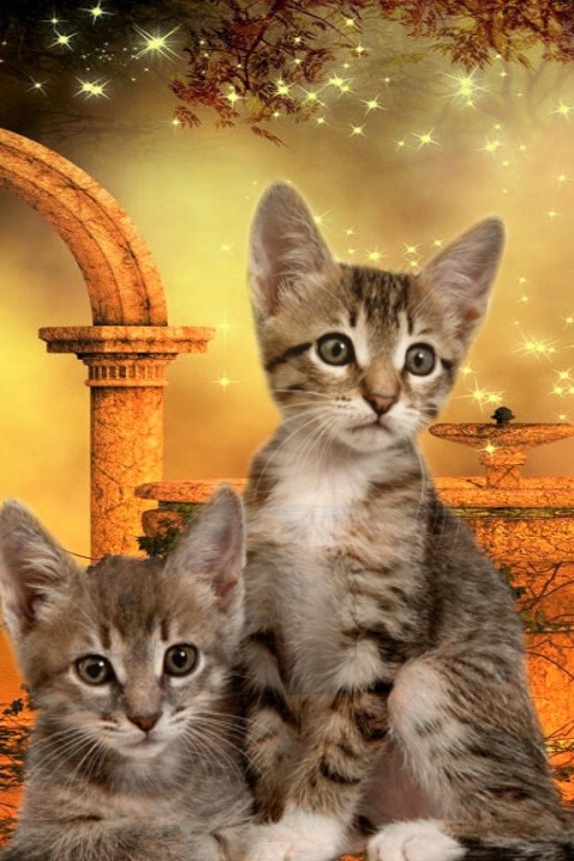 Pin By Kimberly Bradt On Jade The Kitty Cats Animals Kitty