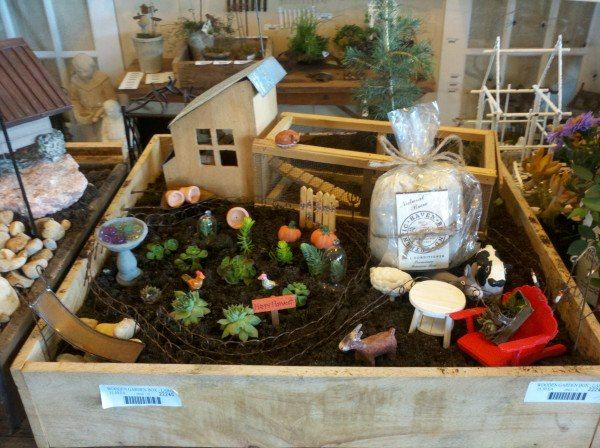 Arlena Schott Of Garden Wise Living TV Shares One Of Her Jeremie Corp  Miniature Gardens Fed