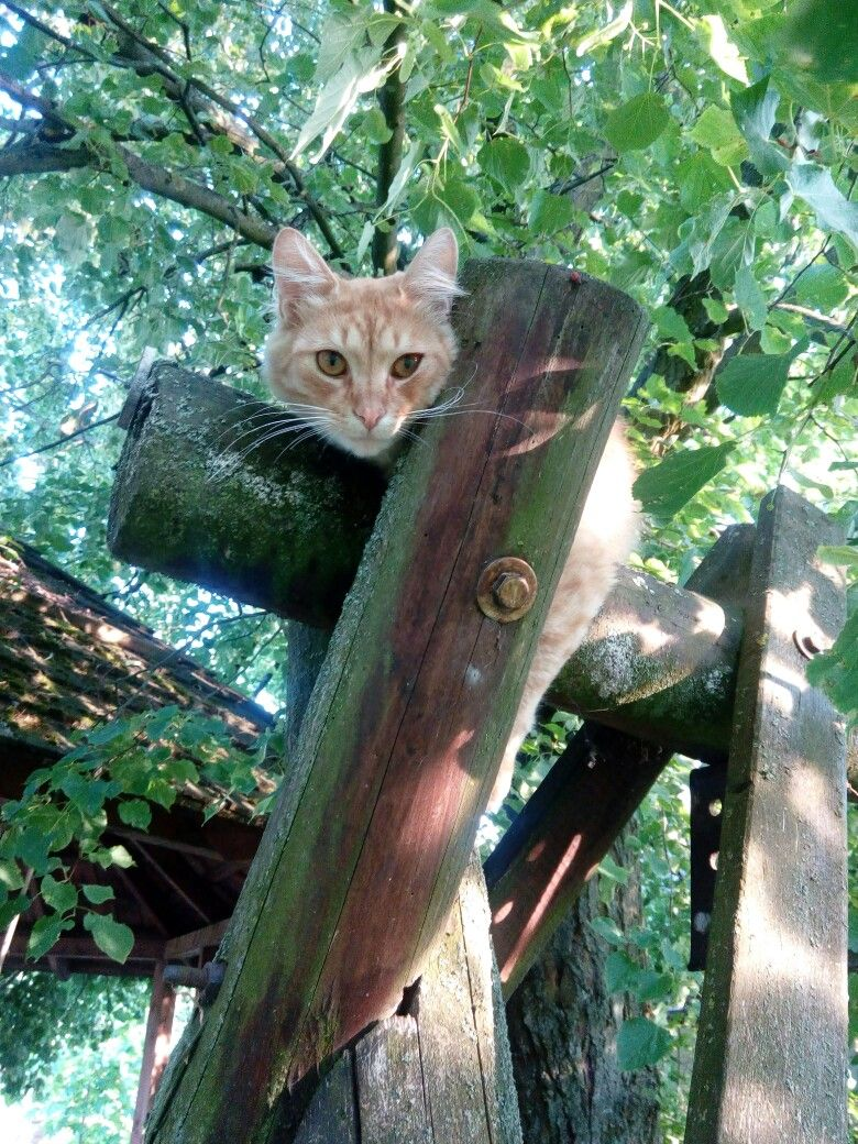 Pin by Marta Wysocka on mój kot Animals, Cats