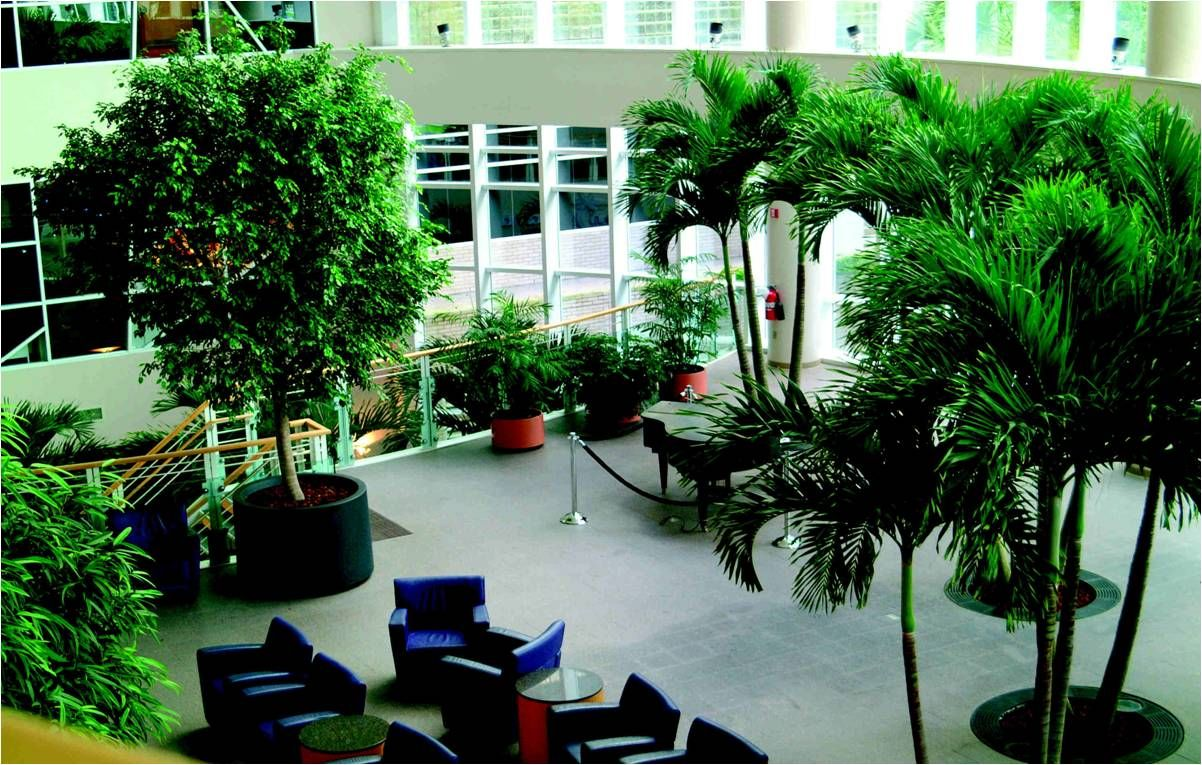 office greenery. gallery of greenery green plants for buildings office