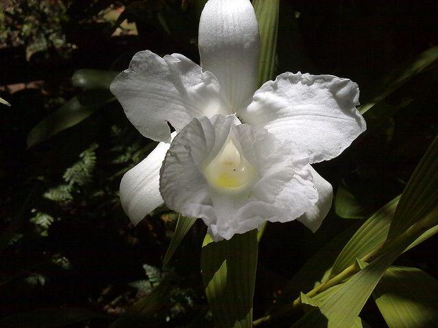 Quinta flower | por MELODIA DAS ARTES