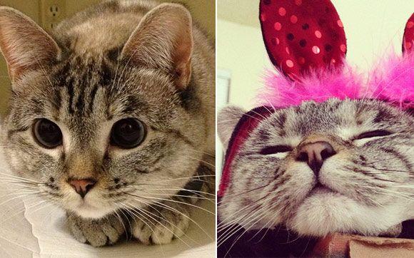 Essa é a @nala_cat. Ela tem dois anos de idade e  (pasmem!) quase 600 mil seguidores! A gatinha me conquistou pelos olhos gigantes. Linda, linda, linda!