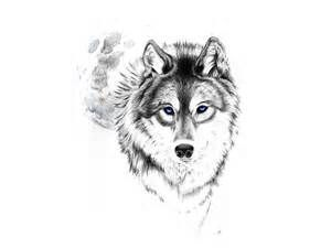 3D animal Coloring Pages for Adults - Bing Images | Wolf ...
