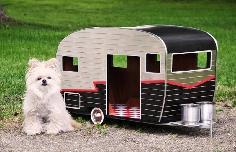 Have dog will camp!