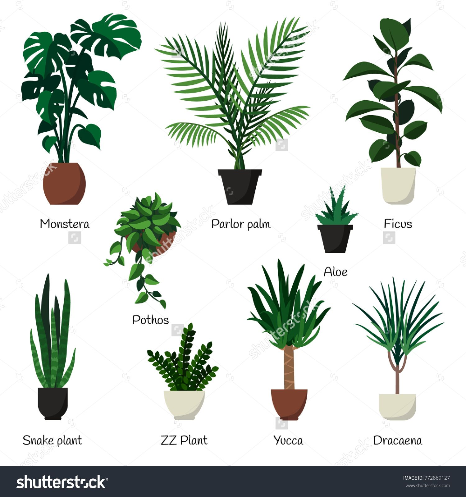 Vector Isolated Set Various Indoor Ornamental Plants With Names