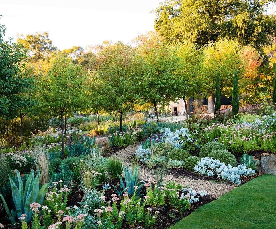Magnificent Adelaide Garden Grown From Recycled Materials Garden Landscape Design Garden Layout Back Garden Design