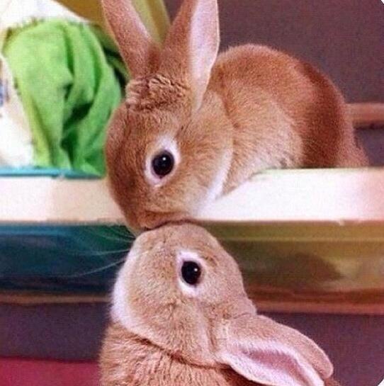 Animal Life On Imagenes De Animales Humor Divertido Sobre Animales Mascotas