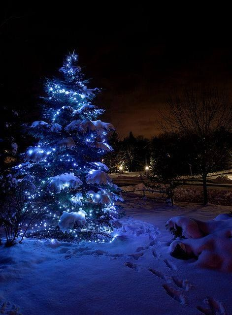 Blue Christmas Tree In A Cold Dark Forest Christmas