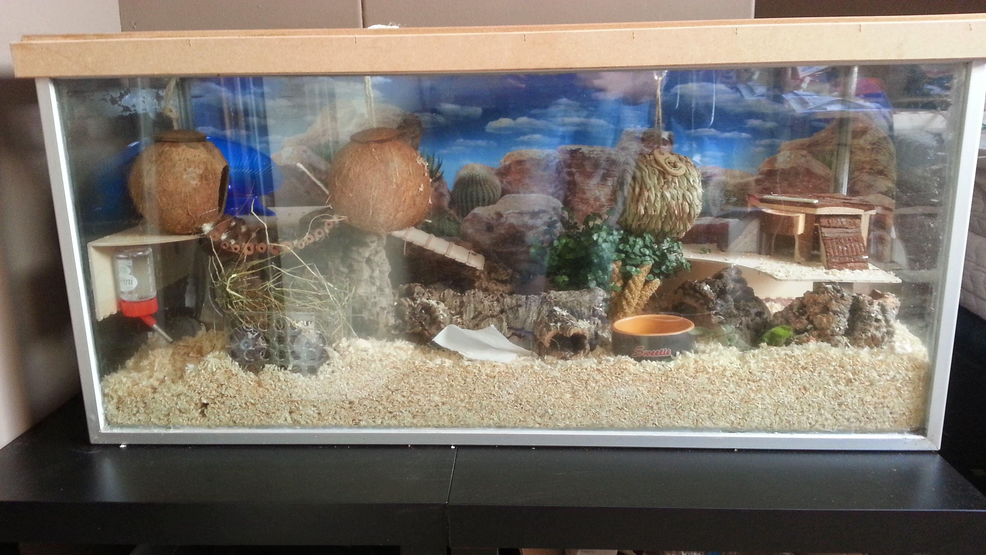 Can I Put My Hamster In An Aquarium  Allcanwearorg
