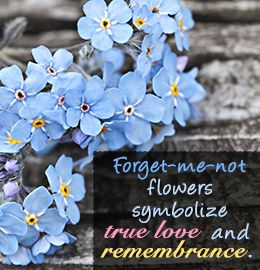 Evoking Curiosity What Do Forget Me Not Flowers Symbolize
