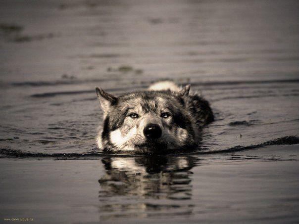 Переплыв целое море, глупо утонуть в луже. Не сдавайся.