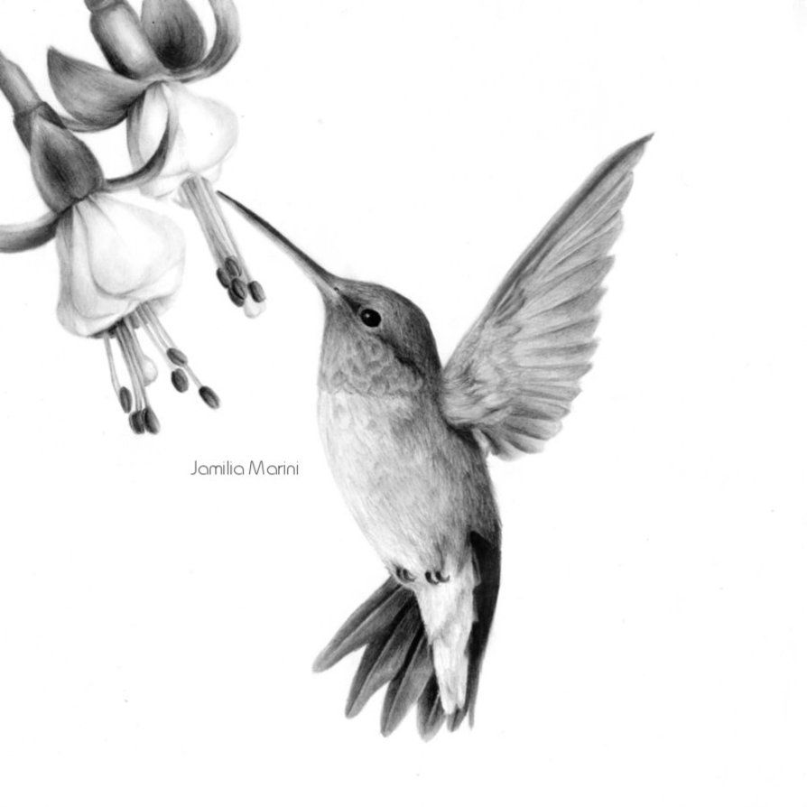 Hummingbird by jamiliamarini