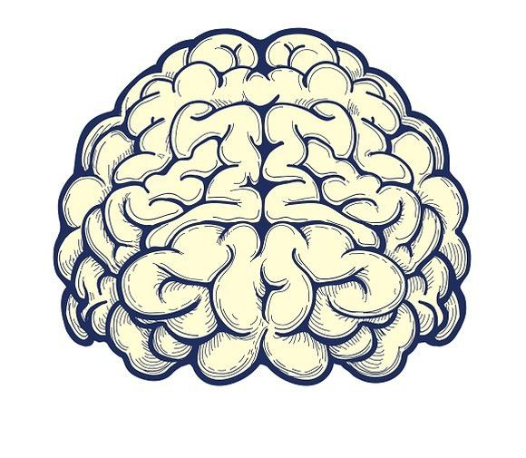 Human brain hand drawn icon. Human Icons. $4.00 | Brain ...