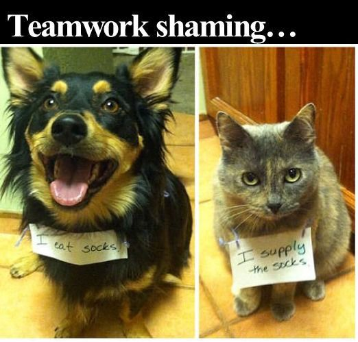 Teamwork Shaming Funny Cute Animals Dogs Cat Cats Adorable Jokes