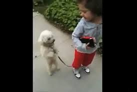 the dog's to smart for the human