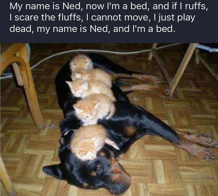 35 Funny Animal Memes Funny Animal Photos Cute Animals Cute Funny Animals