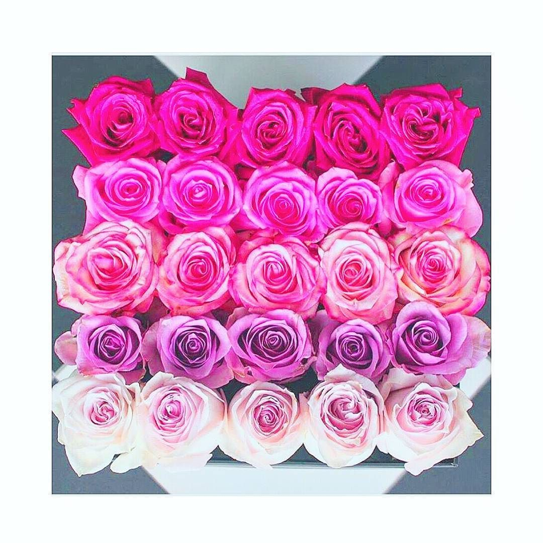 Flowers Pinky Pink Colors Girly Girl Things Love Perfectly