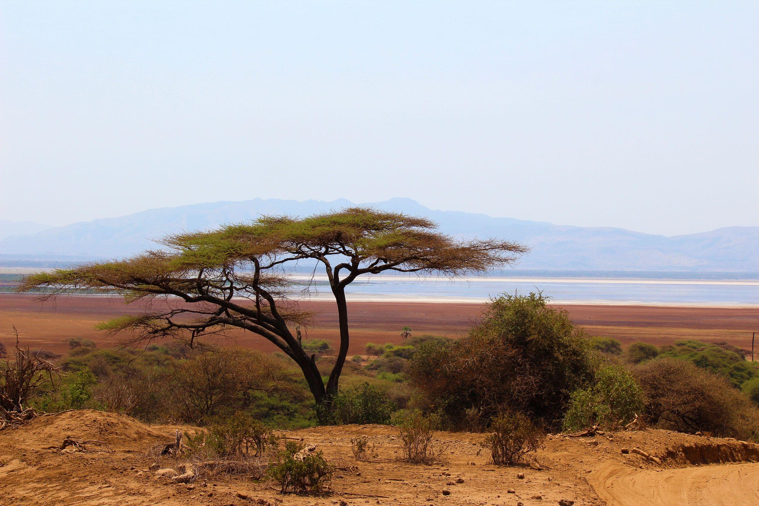 Beautiful Acacia Tree Inside The Ngorongoro Crater Tanzania Travel Spot Places To See Acacia Tree