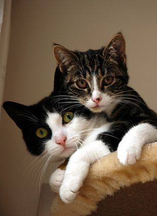 I love the way kittens just pile up on top of each other.
