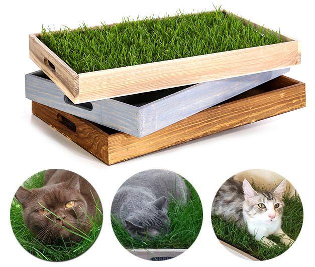 Photo of Hierba real para tu gato en un área de 60x40cm.