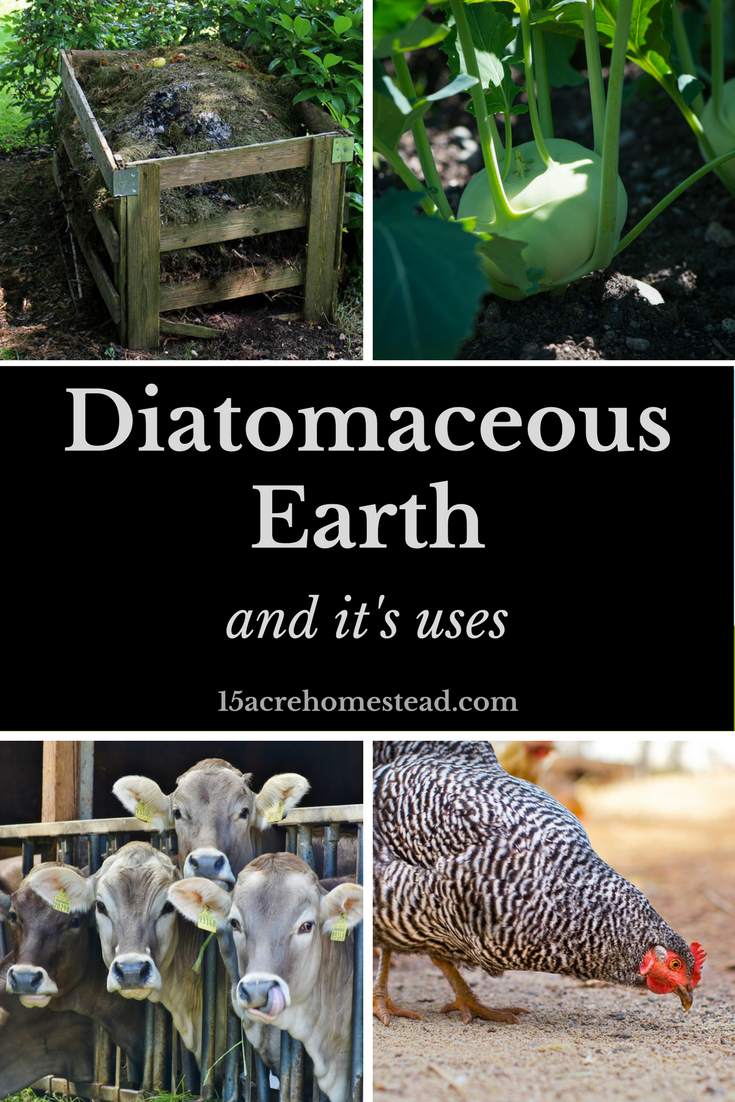Diatomaceous Earth and Its Uses Gardening Organic