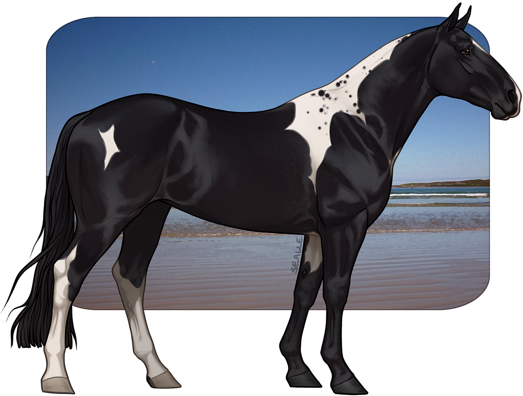 Jols Walpurgisnacht By Sealle On Deviantart Horse Coat Colors Horse Illustration Horses