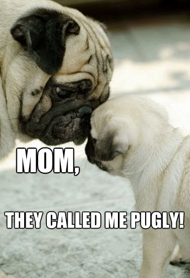 Mom They Called Me Pugly Pugs Dogs Puppy Pugs Funny Animal