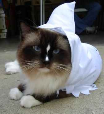 Charlie In Kmart Cat Halloween Costume Totally Ghoul Ghost Pet