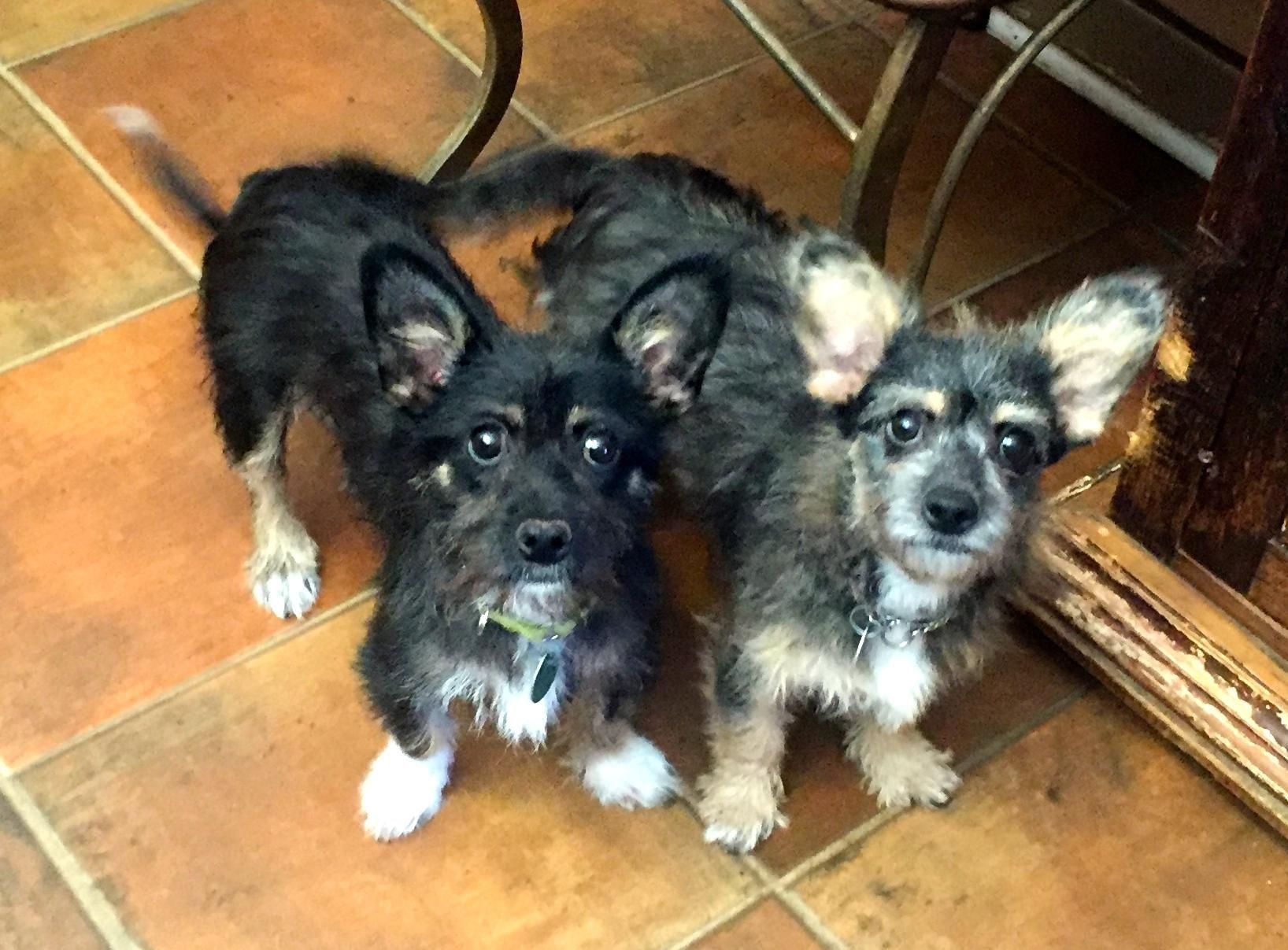 GayWeHo Dogs 4 U 🐶 on Norwich terrier, Dogs, Pets