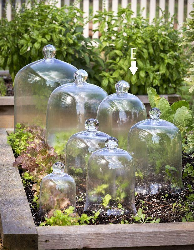 Tall Glass Bell Jar Cloche Garden Cloche Glass Bell Jar Glass