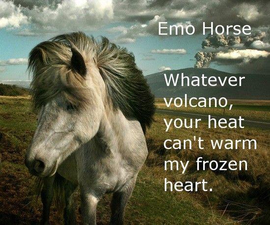 funny photos, emo horse