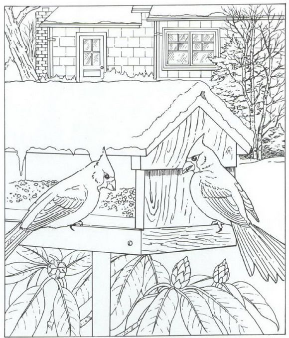 Free Coloring Pages Bird Houses. Image result for adult coloring christmas cardinals birds