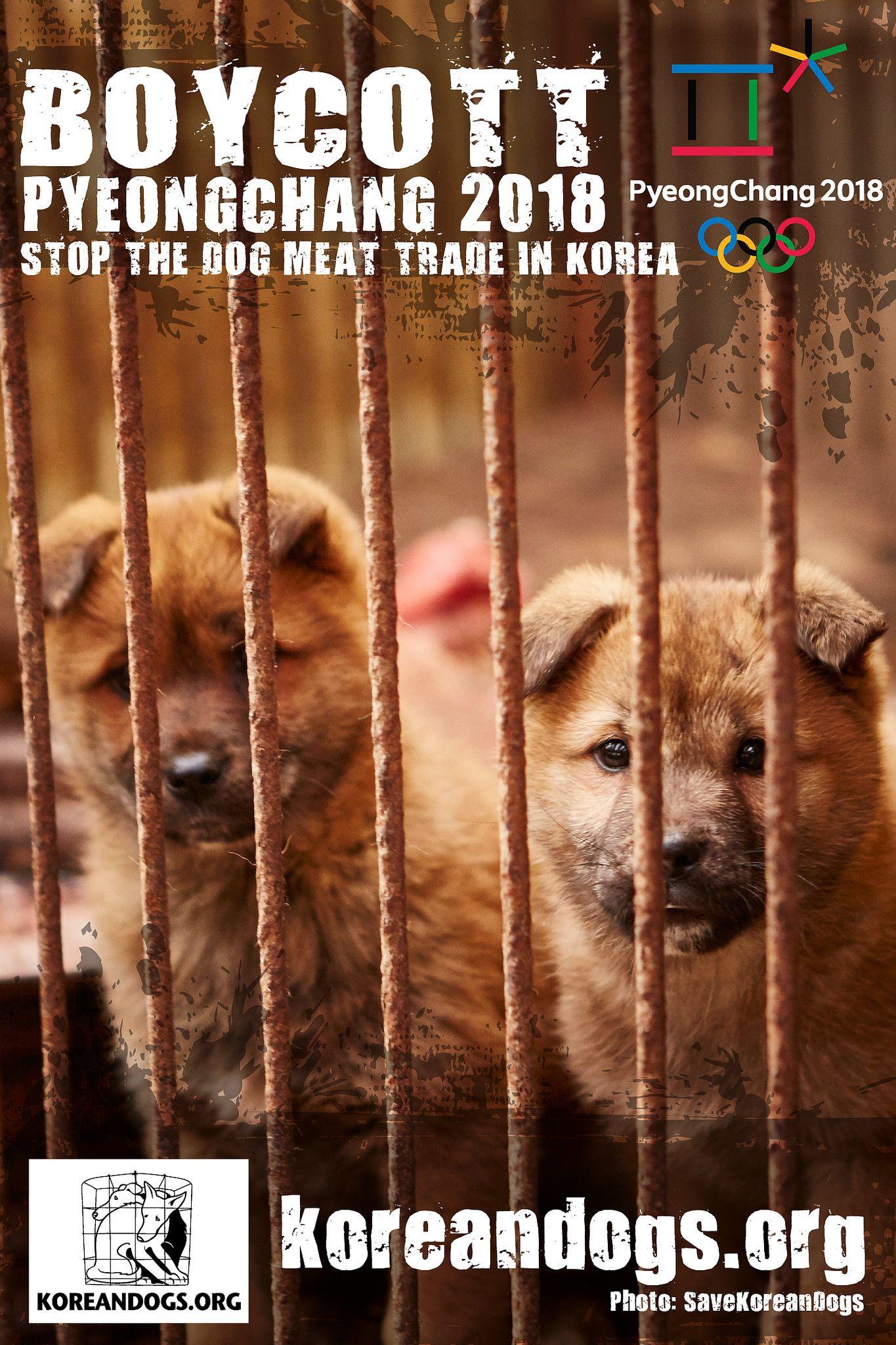 Boycott Pyeongchang 1440x2160 P With Images