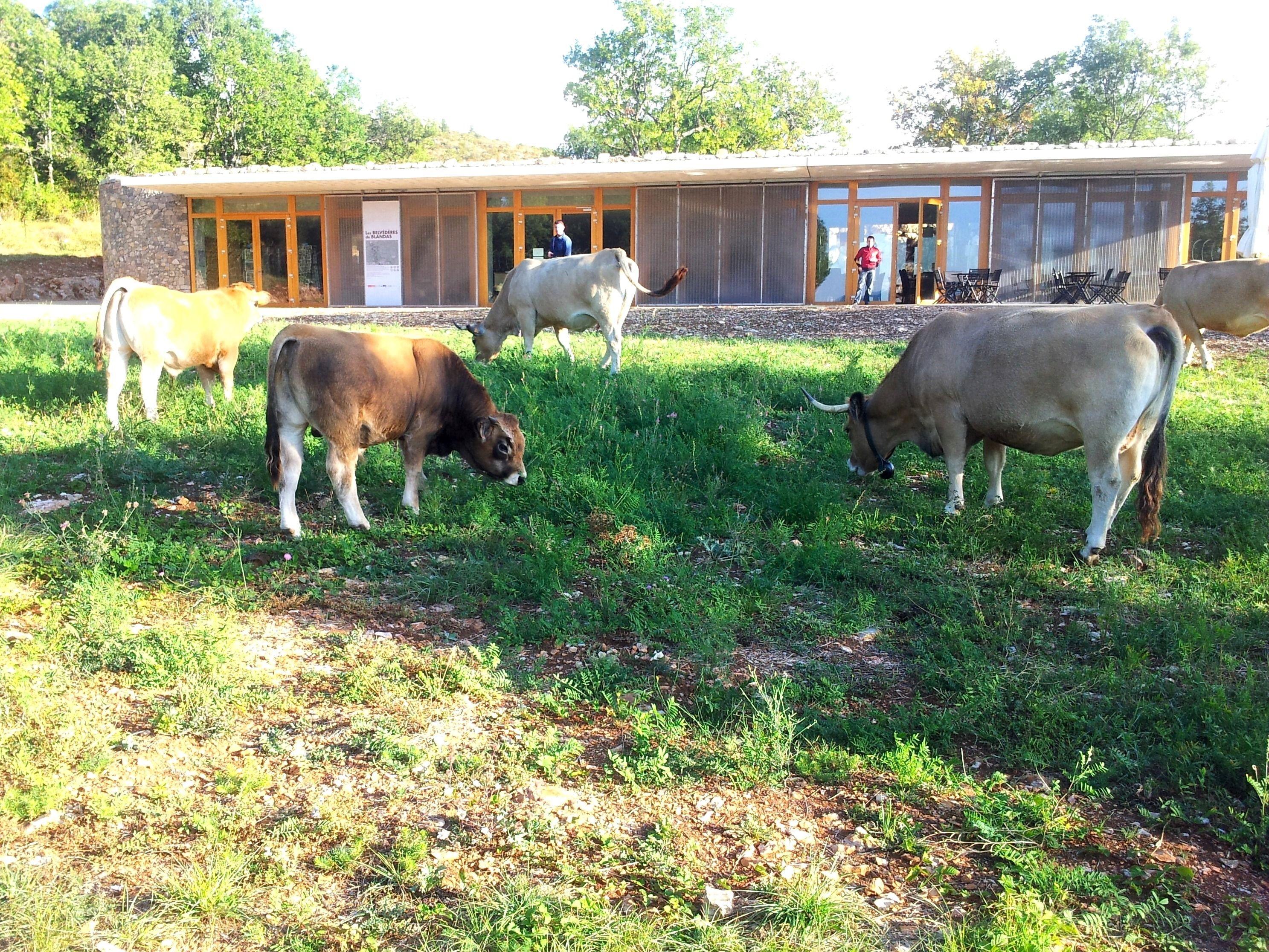 Agropastoralisme Cevennes, Chemin de randonnée et Vacances