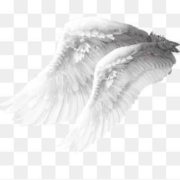 White Wings Angel Wings Feather Wings Material Png Material White Wings Angel Material Png Angel Clipart Wings Asas De Anjo Efeitos Para Foto Fundo Para Fotos