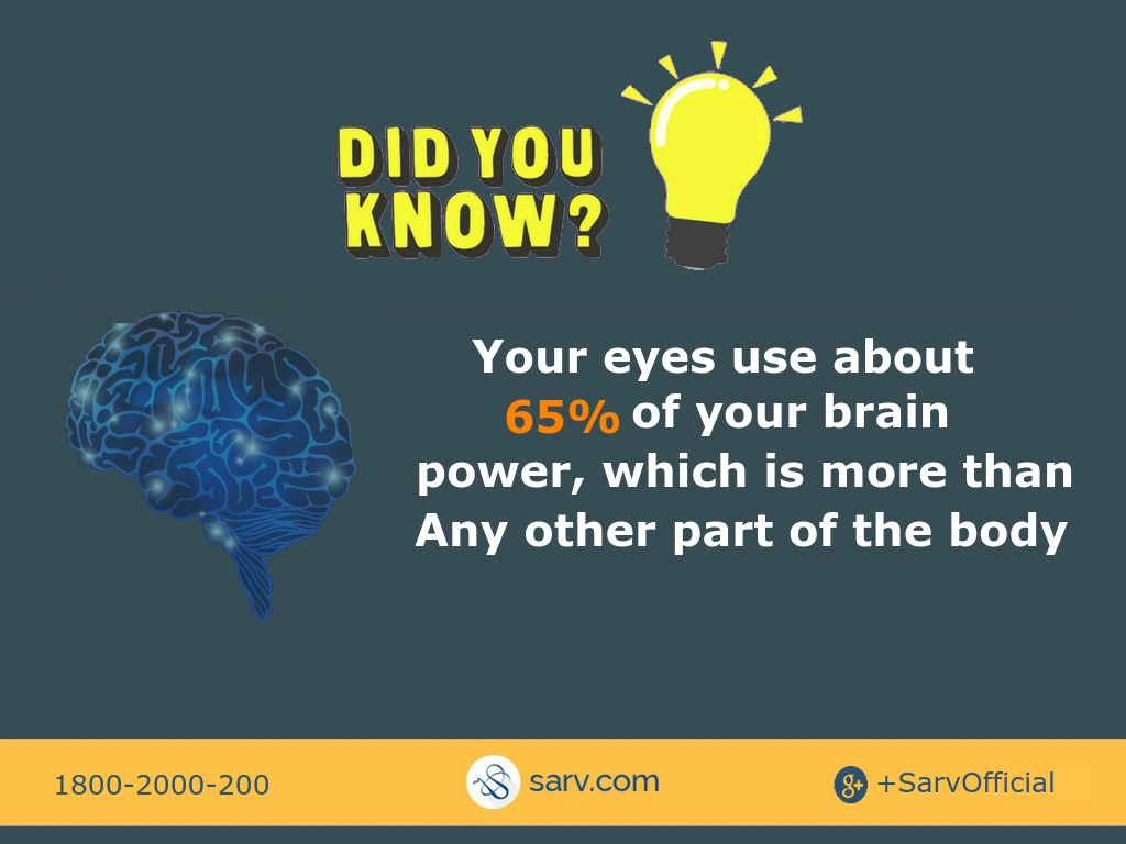 Did You Know Human Eyes Uses 65 Of Brain Power Human