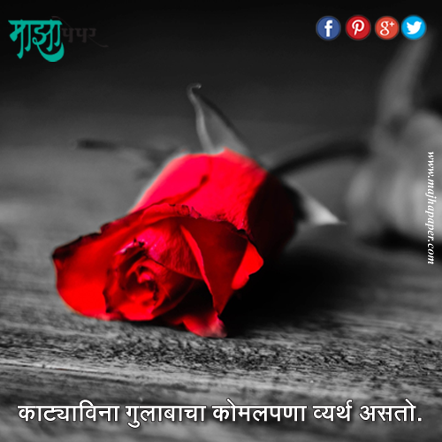 Pin By Majhapaper On Marathi Quotes Beautiful Red Roses Red Roses Wallpaper Iphone Roses