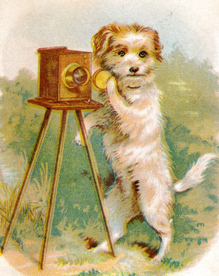 Pin On Victorian Pets