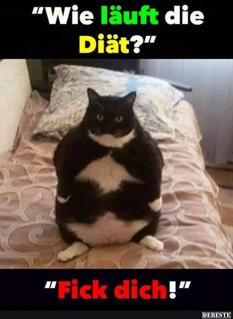 Wie läuft die Diät? | Lustige bilder von tieren, Fette ...