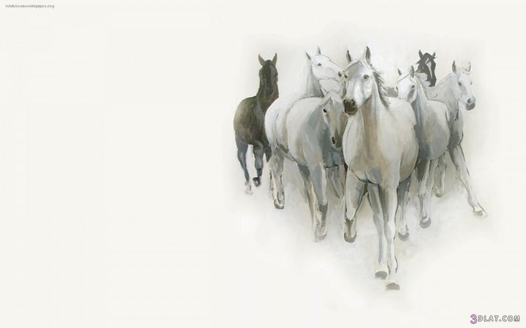 صور احصنة بيضاء وسوداء 2019 صور حصان اسود صور حصان ابيض عالية الجوده Moose Art Horses Art