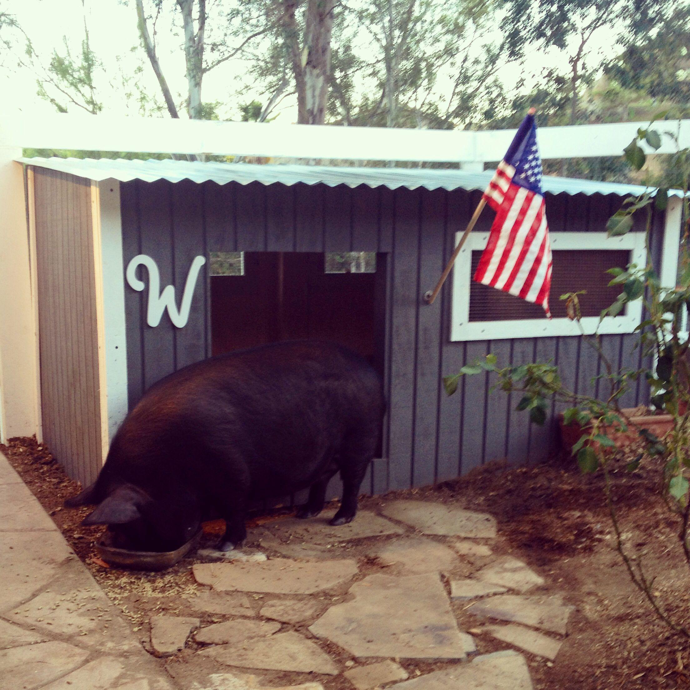 improved forge tag and feeder pig diy new elkhorn hog farm