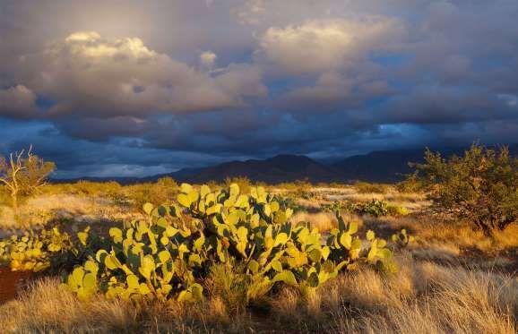 Sonora Desert, Arizona - Sam Camp/Getty Images