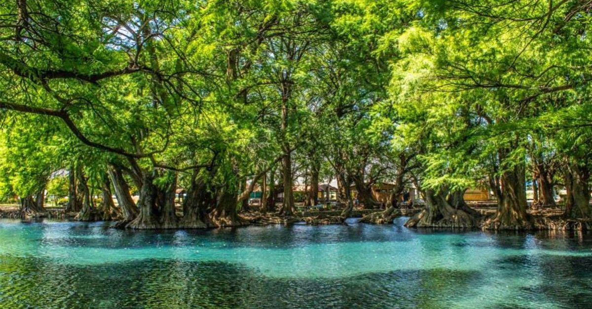 México cuenta con una amplia variedad de destinos increíbles, pero muchos de ellos no son tan famosos como otros, aunque estos se encuentran a la altura de los mejores lugares del país, pues su espectacular belleza y sus majestuosos paisajes, los convierten en verdaderas joyas de la naturaleza, a continuación los destinos que definitivamente tienes …