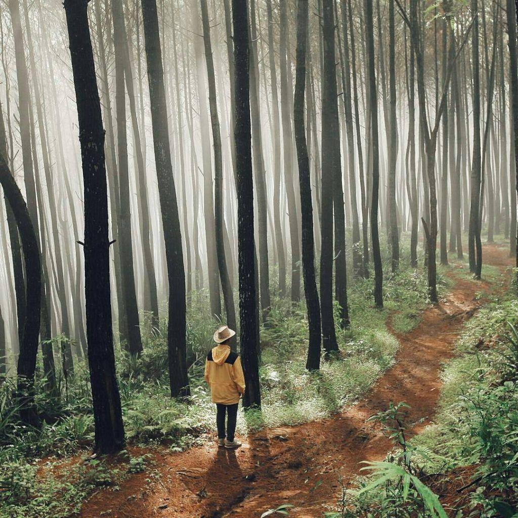Menilik Pesona Ribuan Pinus Di Hutan Pinus Imogiri Yogyakarta Pemandangan Fotografi Fotografi Potret